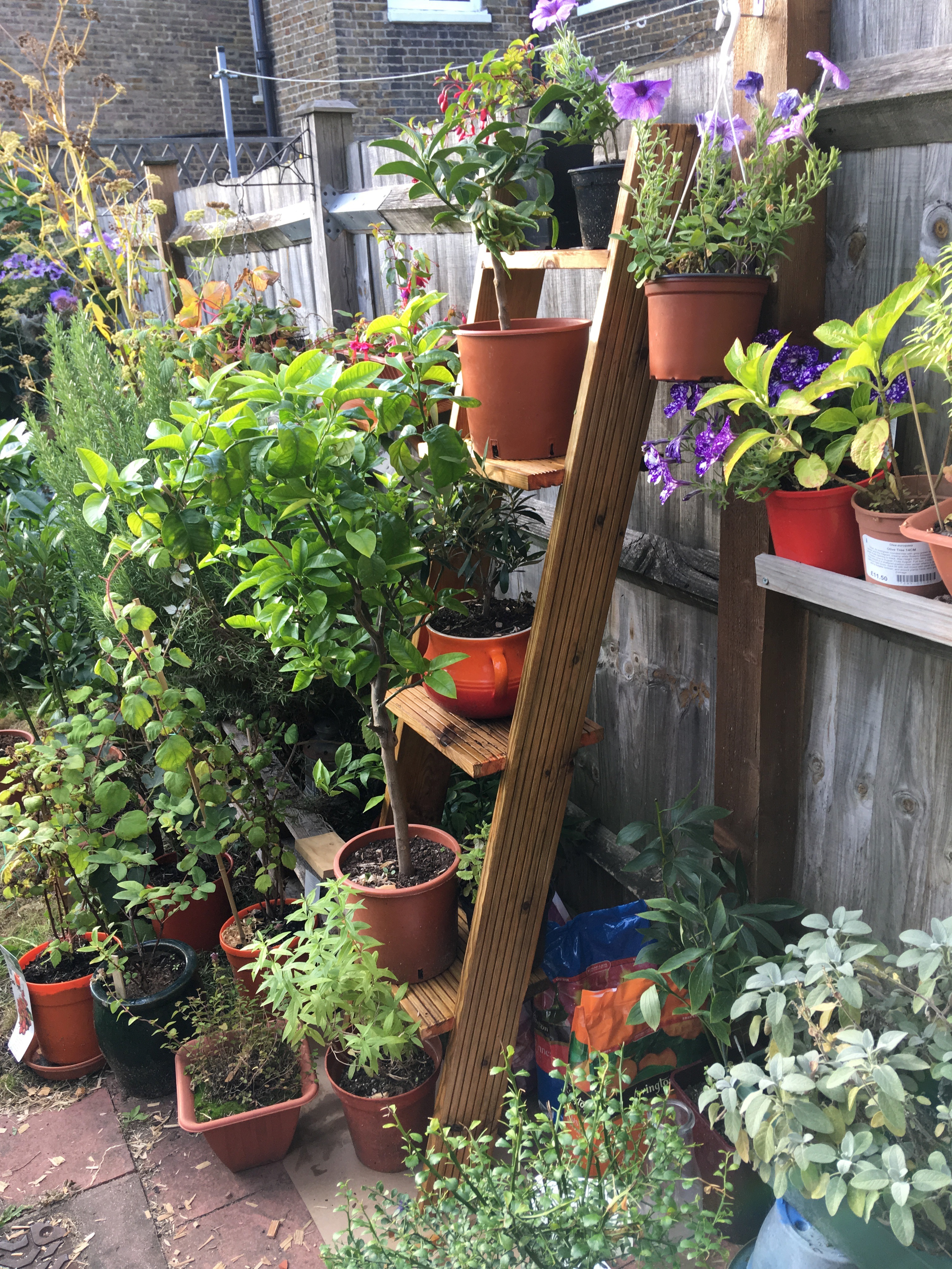 Plant Display With Decking Projects Discourse South London